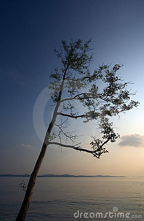 Free Tree Branch Reaching Out To Sky Stock Photos - 4794393