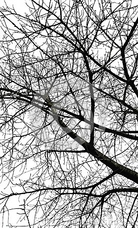 Free Tree Branches Stock Photo - 86204260