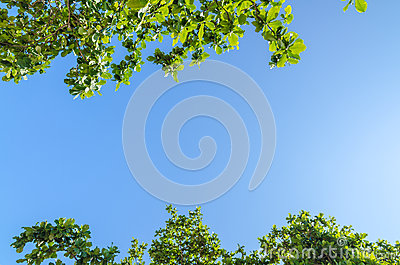 Tree branches with leaves against blue sky