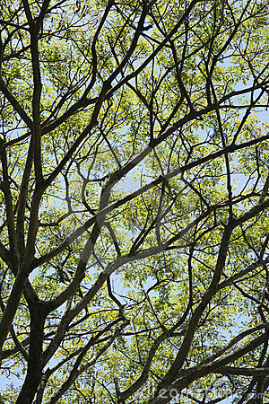 Tree branches with leaves and sky.