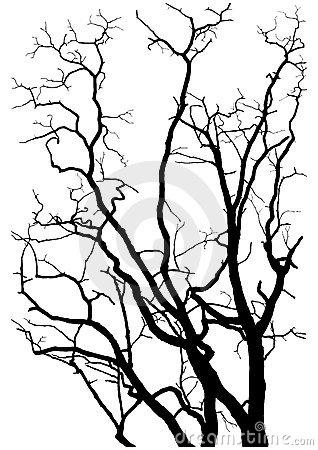 Free Tree Branches Silhouette Royalty Free Stock Image - 10721506