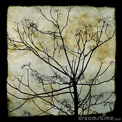 Free Tree Branches Silhouette Stock Photos - 11937373