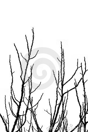 Free Tree Branches Silhouette Royalty Free Stock Photos - 12431268