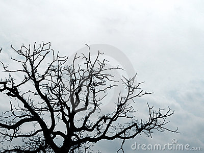 Tree branches silhouetted