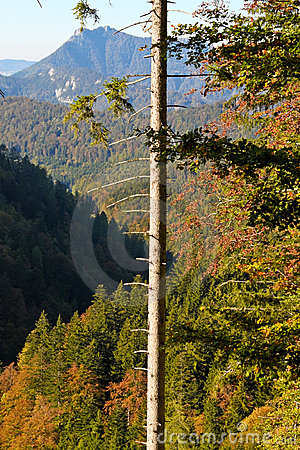 Tree with broken branches and view of alps