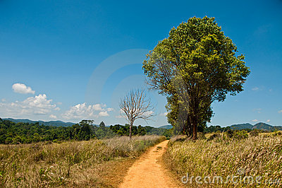 Tree, brown way and blue sky in national park