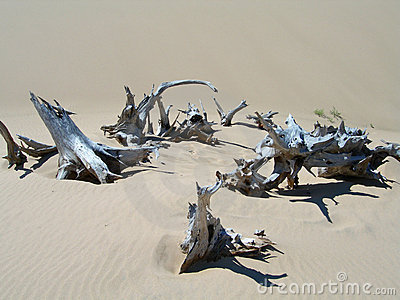Tree carcases in dry arid environment