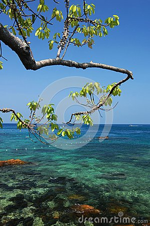 Tree with clear sea