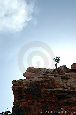 Free Tree Cliff Cloud Royalty Free Stock Photos - 721138