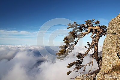 Tree on the cliff in moutain