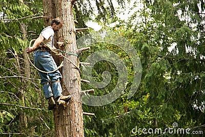 Tree climber and logger