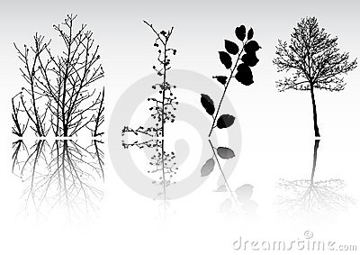 Tree  clipart collection
