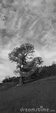 Tree and Clouds