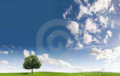 Tree and cloudscape