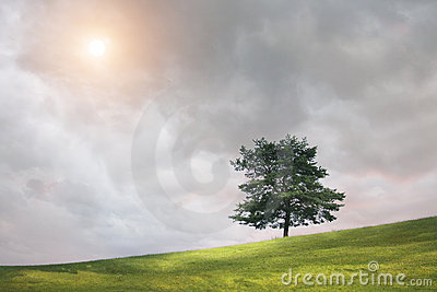 Tree and cloudy sky