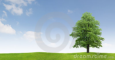 Tree in countryside field
