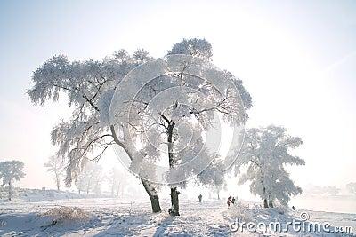 A rimed tree