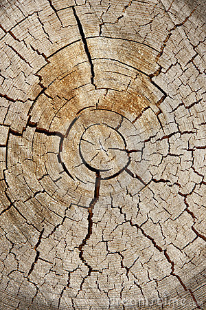 Tree Cross Section