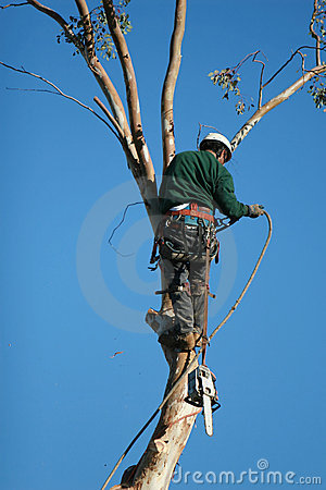 Free Tree Cutter Stock Image - 2180201