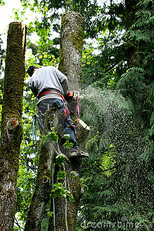 Free Tree Cutter Royalty Free Stock Images - 2462819