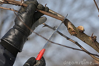 Tree cutting with saw