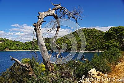 Tree dead