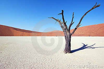 Tree in the desert - Deadvlei