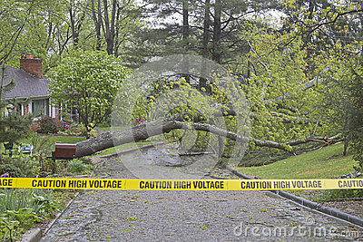 Tree Down, Caution High Voltage