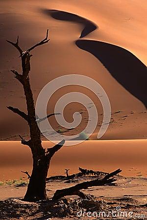 Tree and dune, Sossusvlei, Namibia