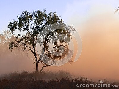 Tree In Dust Free Public Domain Cc0 Image