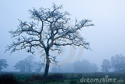 Tree in early morning mist in winter