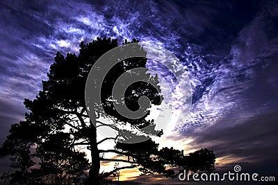 Tree of Eden
