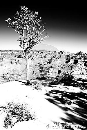 Tree on the edge
