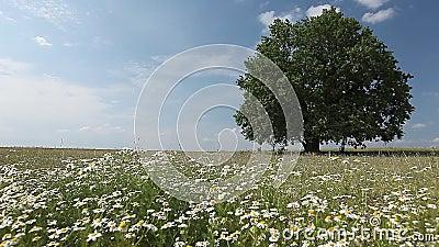 tree för äng för torrt gräs för höst ensam