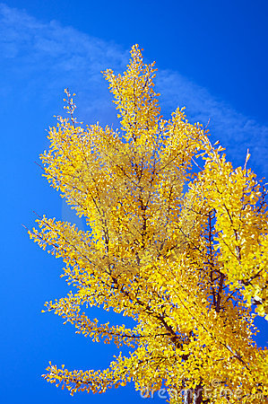 Tree during fall