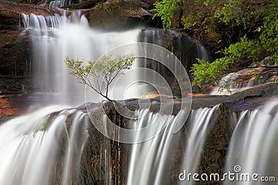 Tree in falls