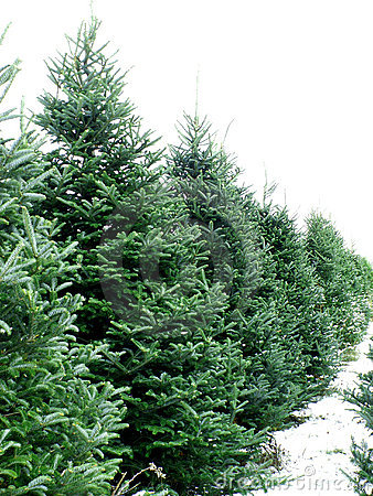 Free Tree Farm Royalty Free Stock Image - 381246