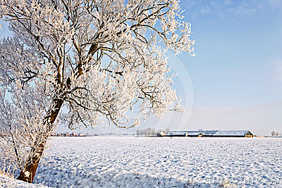 Tree and farm in a white winter landscape