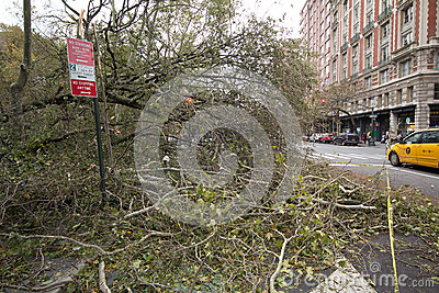 Tree felled by Hurricane Sandy, Manhattan Editorial Stock Image