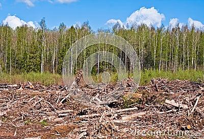 Tree felling