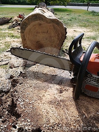 Tree felling: chainsaw with fallen tree