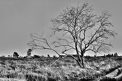 Tree in the fen
