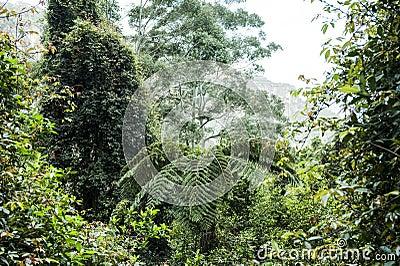 Tree fern in the rainforest of Australia