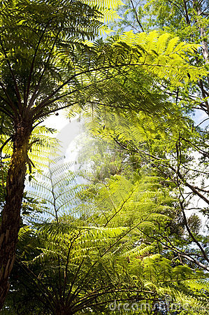 Free Tree Ferns Stock Photos - 19290493