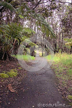 Tree ferns and ohia trees