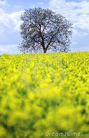 Tree in a field of  flowers