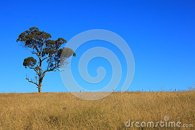 Tree on field by blue sky