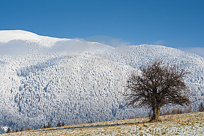 Tree, field and snowy mountains