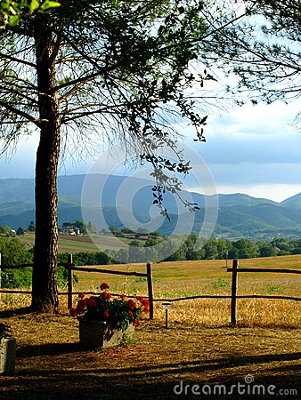 Tree And Fields Stock Images - Image: 6315644