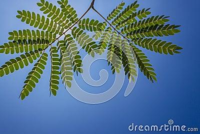 Tree Fine Green Leaves
